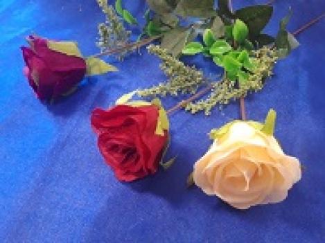 Роза PM54145