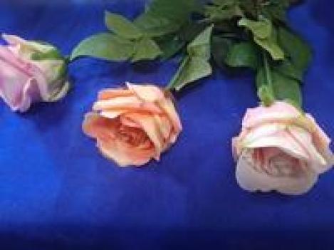 Цветок роза A65SUN490
